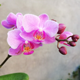 pink orchid winter blooming flower