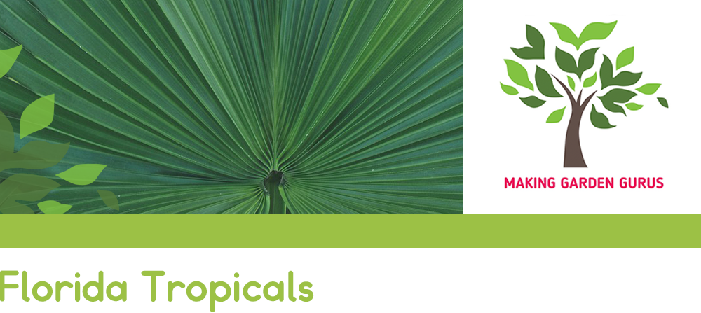 florida tropicals palm header